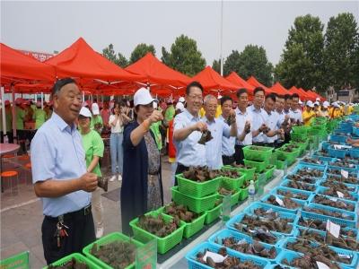 """""""阳光生活 文明实践""""城阳村社区举行第四届千人包粽子大赛"""